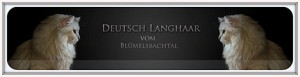 Deutsche langhaar Vom Blummelsbachtal