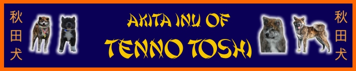 akita of Tenno Tosh