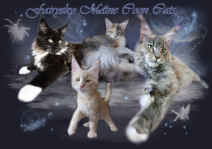 Fairsky Maine Coon Cats