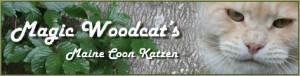 Magic Woodcats