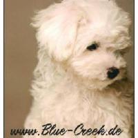 blue-creek.de