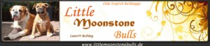 little moonstone bulls